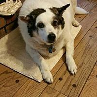 Adopt A Pet :: Murphy - O'Fallon, MO