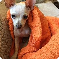 Adopt A Pet :: Hercules - Thousand Oaks, CA