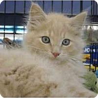 Adopt A Pet :: WILLIE - Riverside, RI
