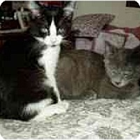Adopt A Pet :: Chrissy & Christopher - Arlington, VA