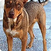Adopt A Pet :: Hope - Gilbert, AZ