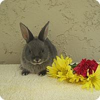 Adopt A Pet :: Noodle - Bonita, CA