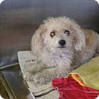 Adopt A Pet :: Princensa - Encino, CA