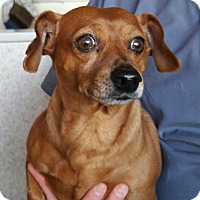 Adopt A Pet :: Tony - Salem, OR