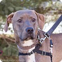 Adopt A Pet :: Carl - Grand Rapids, MI
