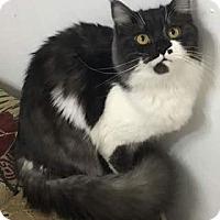 Adopt A Pet :: Kevin - Ennis, TX