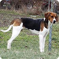 Adopt A Pet :: Ashlinn - Van Wert, OH
