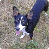 Adopt A Pet :: Nori - Lodi, CA