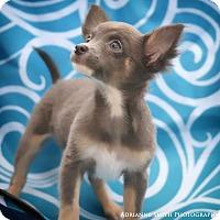 Adopt A Pet :: Trinidad - Barnesville, GA