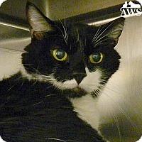 Adopt A Pet :: Junior - West Kennebunk, ME