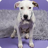 Adopt A Pet :: Odie - Baton Rouge, LA