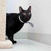 Adopt A Pet :: MR. B - Houston, TX