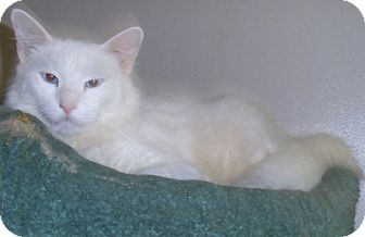 Domestic Mediumhair Cat for adoption in Bear, Delaware - Arlo & Wilson