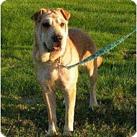Adopt A Pet :: Geisha - Rigaud, QC