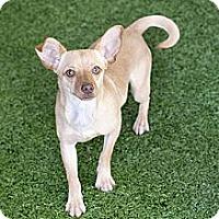Adopt A Pet :: Jazmine - Mission Viejo, CA