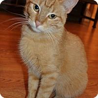 Adopt A Pet :: Rusty - Reston, VA