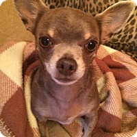 Adopt A Pet :: Dinky - Edmond, OK
