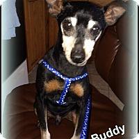 Adopt A Pet :: Buddy - Sacramento, CA