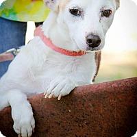 Adopt A Pet :: Sparky - Conyers, GA