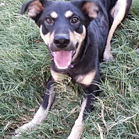 Adopt A Pet :: Charolette - Olympia, WA