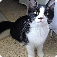 Adopt A Pet :: Prince - Eagan, MN