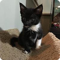 Adopt A Pet :: Ares - East Brunswick, NJ