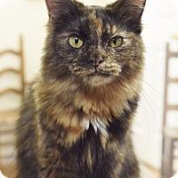 Adopt A Pet :: Amy - Homewood, AL