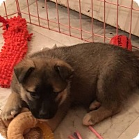 Adopt A Pet :: Wolf - Bernardston, MA