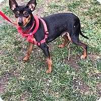 Adopt A Pet :: Glory - Sacramento, CA