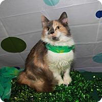 Adopt A Pet :: Katie - Erwin, TN