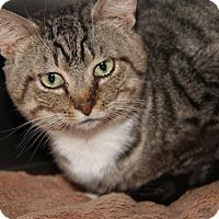 Adopt A Pet :: Gordon - Marietta, OH