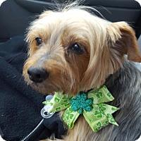 Adopt A Pet :: Cherie - Mechanicsburg, PA