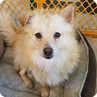 Adopt A Pet :: Peanuts - conroe, TX