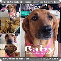 Adopt A Pet :: Baby - Hearne, TX