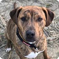 Adopt A Pet :: Dalton - Newport, KY
