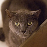 Adopt A Pet :: Yankee - Grayslake, IL