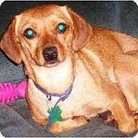 Adopt A Pet :: Sadee - Houston, TX