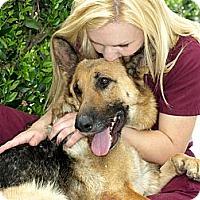 Adopt A Pet :: Gloria - Mission Viejo, CA