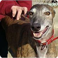 Adopt A Pet :: Verne - Windsor Heights, WV