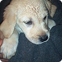 Adopt A Pet :: Marge - Morgantown, WV