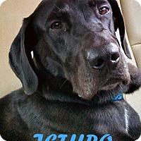 Adopt A Pet :: Jethro - Largo, FL