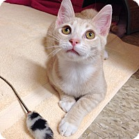 Adopt A Pet :: Fabrizio - Foothill Ranch, CA