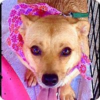 Adopt A Pet :: Sheila - Bastrop, TX