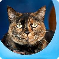Adopt A Pet :: Bonnie - Coronado, CA