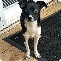 Adopt A Pet :: Jasmine (FORT COLLINS) - Fort Collins, CO