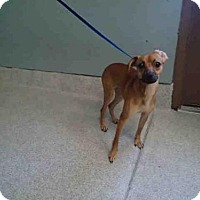 Adopt A Pet :: COCO - Tallahassee, FL