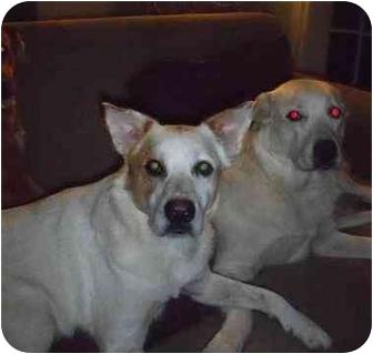 Australian Cattle Dog Mix Dog for adoption in Pensacola, Florida - Max