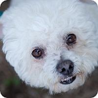 Adopt A Pet :: Tucker - La Costa, CA