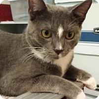 Adopt A Pet :: Captain Walker Tripod - McDonough, GA