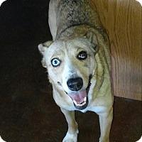 Australian Cattle Dog Mix Dog for adoption in Scottsdale, Arizona - Darla